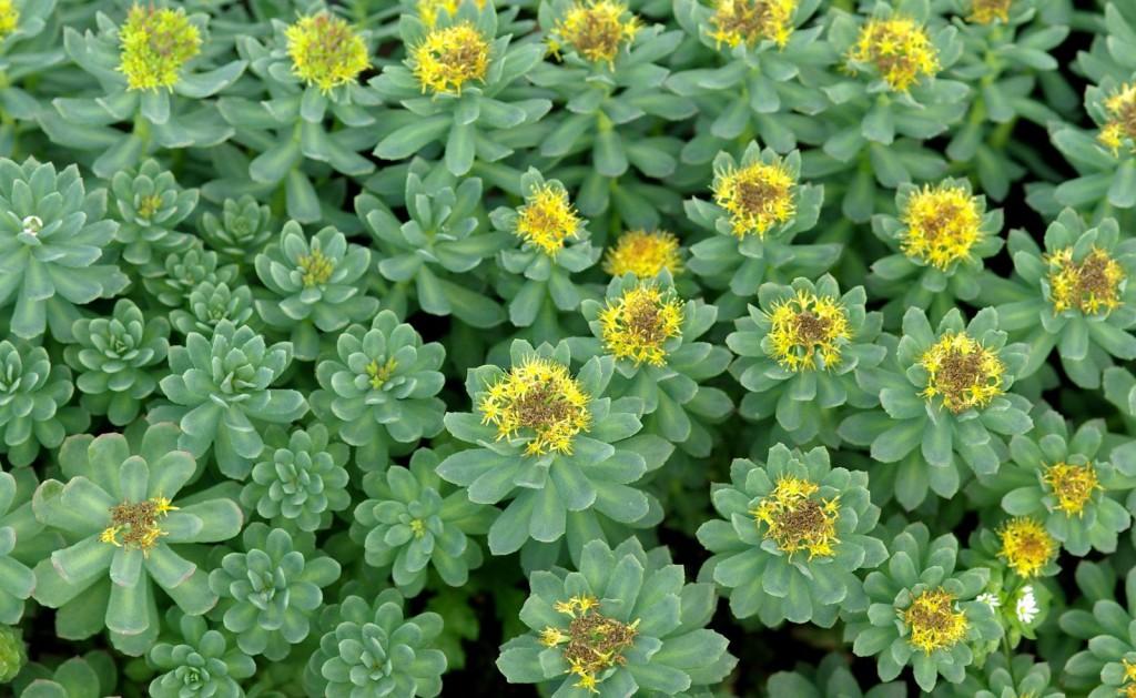 herbavit-blog-wpis-06